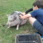 Le cochon Carmen se fait papouiller à la ferme